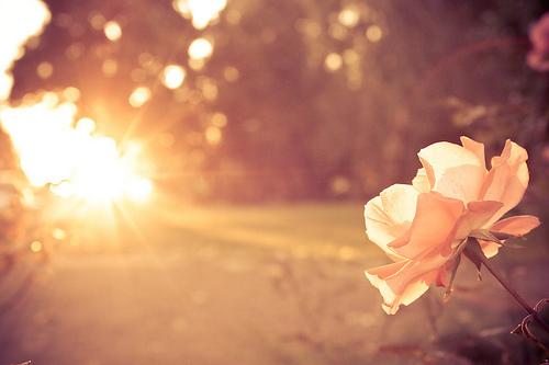 人生,总会有不期而遇的温暖,和生生不息的